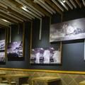 Fotos de nuestra colaboradora Marisela Somoza