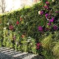 Jardín vertical para Hotel Araba
