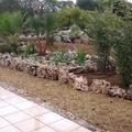 Plantación de cicas, yucas, ficus....