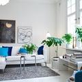 plantas en salón blanco