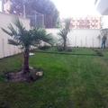 Resiembra de jardin en comunidad