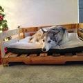 Sofa perro palet