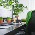 Cuidar plantas de interior mientras estás de vacaciones
