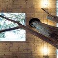 Vivienda de diseño en el bosque