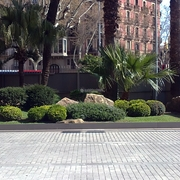 Jardin Planta y Arbustos Autóctonos Zona