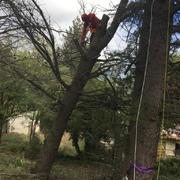 A por el tronco