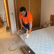 Desinsectación del colchón