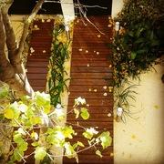 Diseño y construcción de un pequeño jardín en las proximidades de Arturo Soria (Madrid)