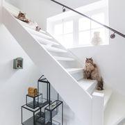 Escalera con gatos