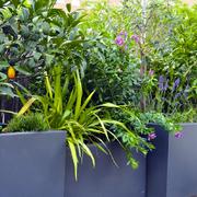 Estilo vegetación
