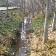 Limpieza y recuperación de riveras.