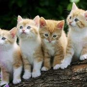 olores-gatos-casa72-1024x640