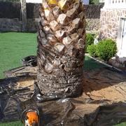Podar y arreglar palmeras
