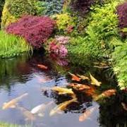 Estanque con peces y plantas