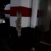 Reparación De Pilar En Garaje