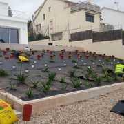 Plantar plantas para espacio de jardín