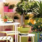 plantas balcón