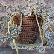 plantas-de-invierno1