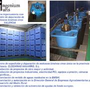 PROYECTO SINGULAR. Proyecto industrial de centro de expedición y depuración de moluscos bivalvos vivos