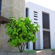 Una vivienda mediterránea con olor a azahar