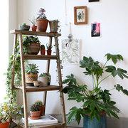 Un estante para plantas a partir de una vieja escalera de madera reciclada