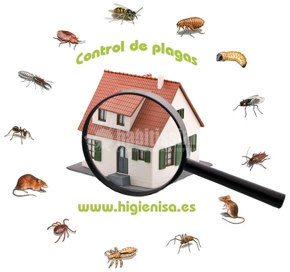 Tratamientos fitosanitarios, plagas de jardín, eliminar procesionaria del pino, eliminar picudo rojo, eliminar avispas