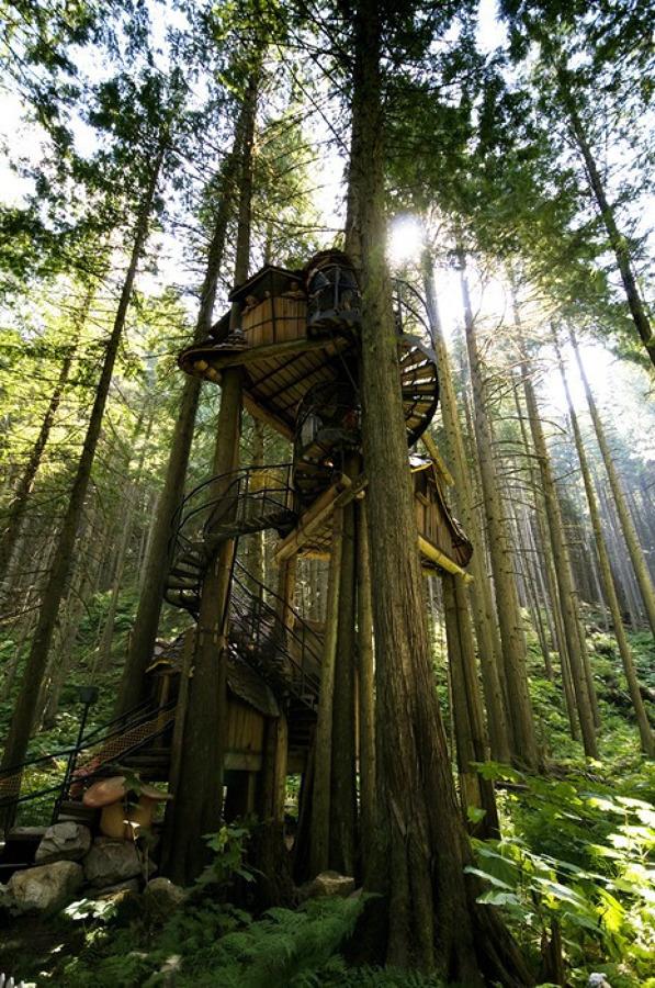 casas de árbol estructura