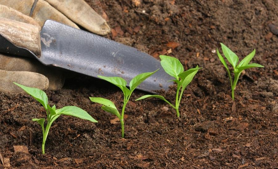 abonar plantas