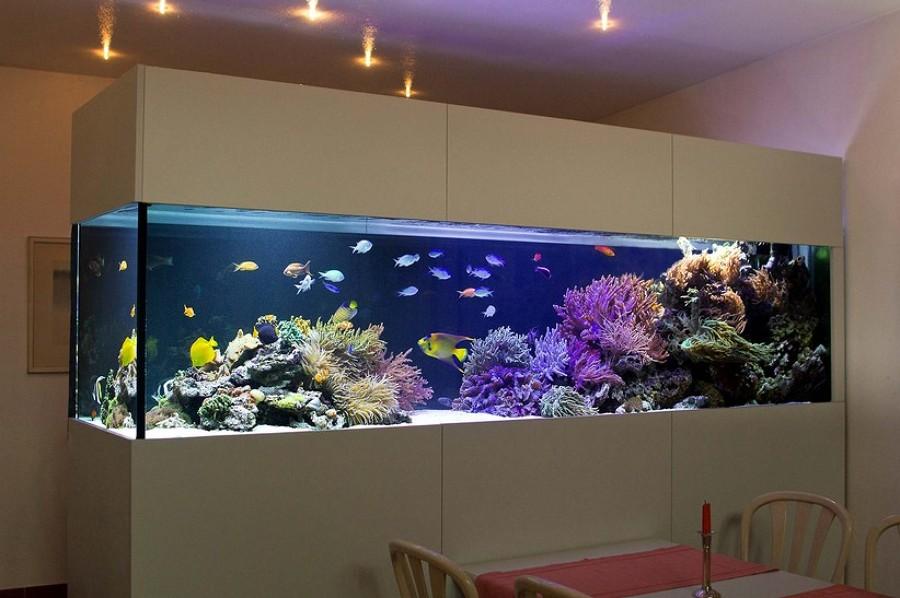 Si ntete como pez en el agua con un acuario en casa - Peces para tener en casa ...
