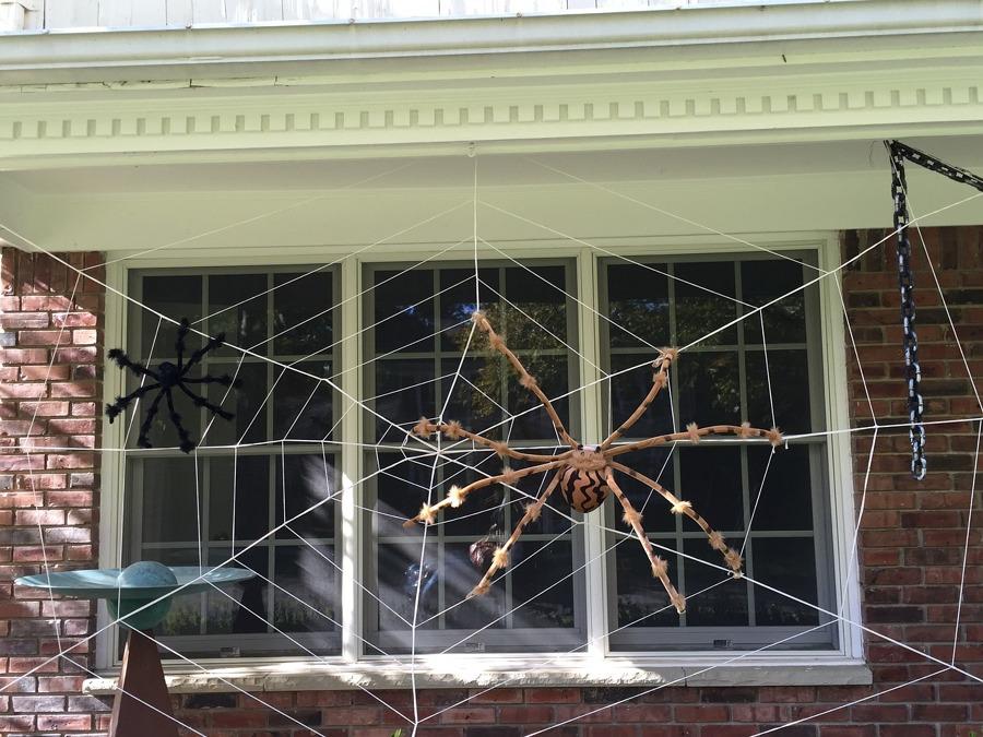 Araña en ventana