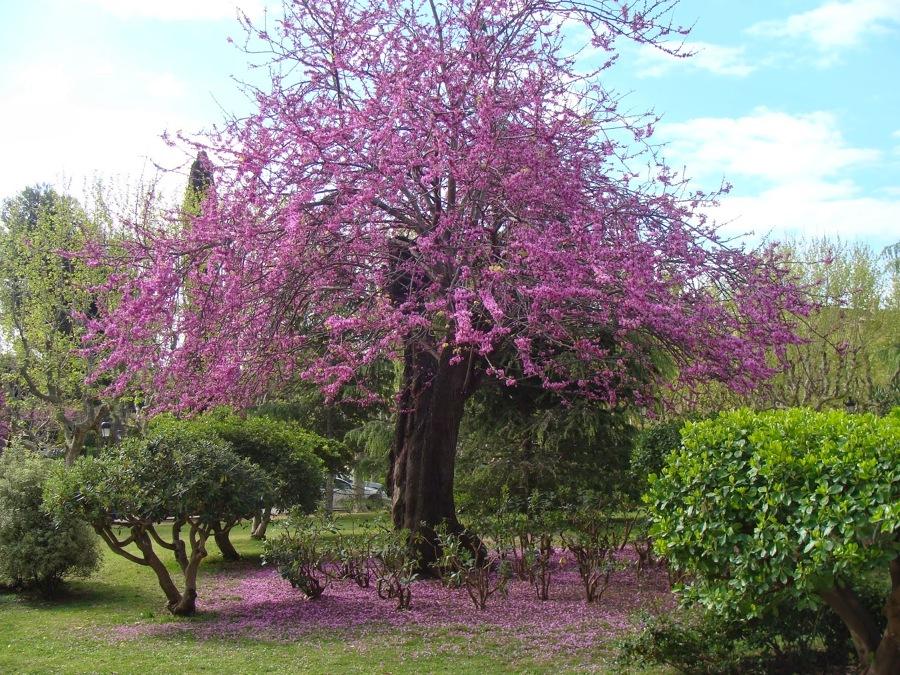 Qu rbol debo plantar ideas decoradores - Arboles ornamentales para jardin ...