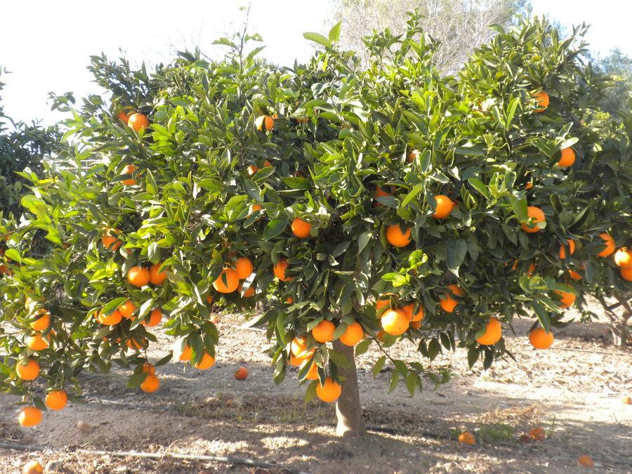 Rboles frutales para sembrar en septiembre y octubre - Como cuidar los arboles frutales ...