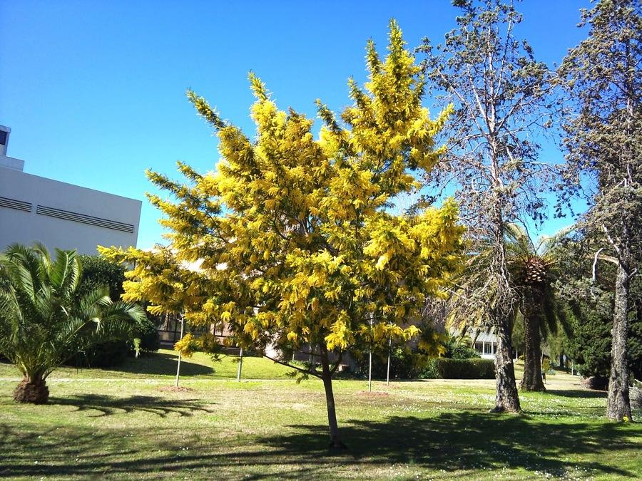 árbol jardín