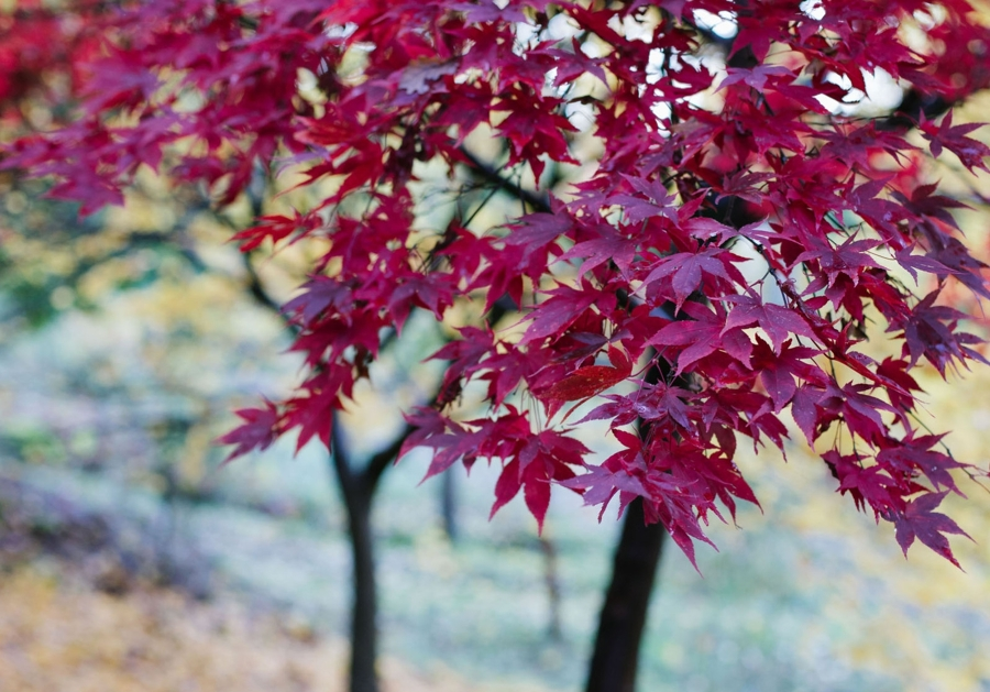Foto rboles para el jard n con hojas bonitas de miriam for Arboles de flores para jardin