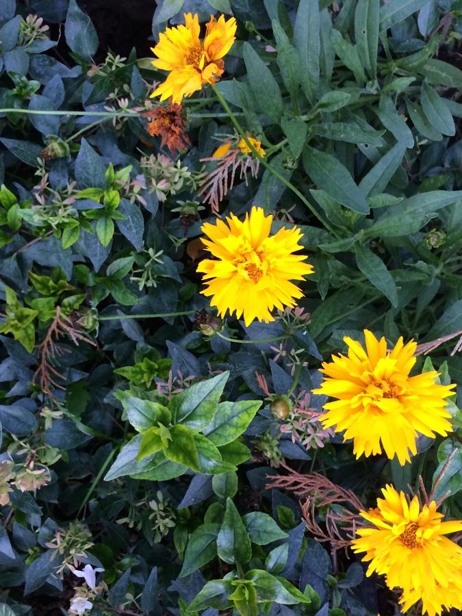 arbustos perennes y plantas vivaces conviviendo