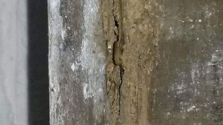 Ataque por termitas
