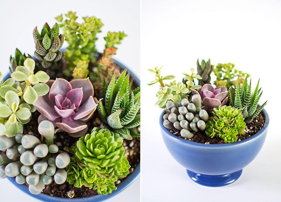 5 plantas de interior que no podr s matar ideas jardineros - Cactus cuidados interior ...