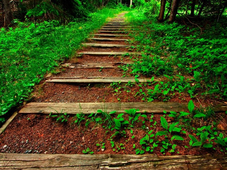 Camino de madera y piedra