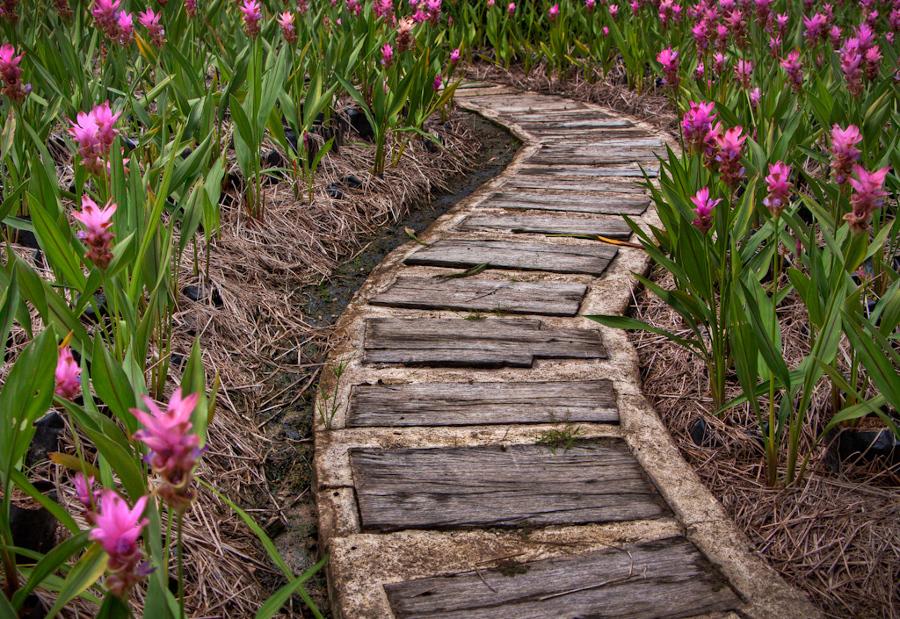 Qué Tipo De Camino Puedo Usar En Mi Jardín Ideas Jardineros