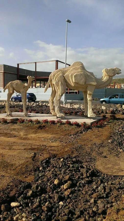 Camellos en las Chafiras Tenerife.A petición del ayuntamiento