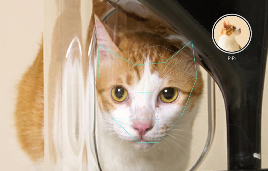 cat-1024x655