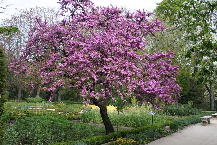 árbol del amor en un parque