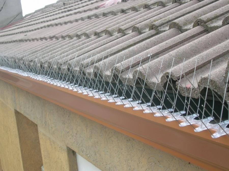 Colocación de dispositivos anti-palomas en canalón pluvial.