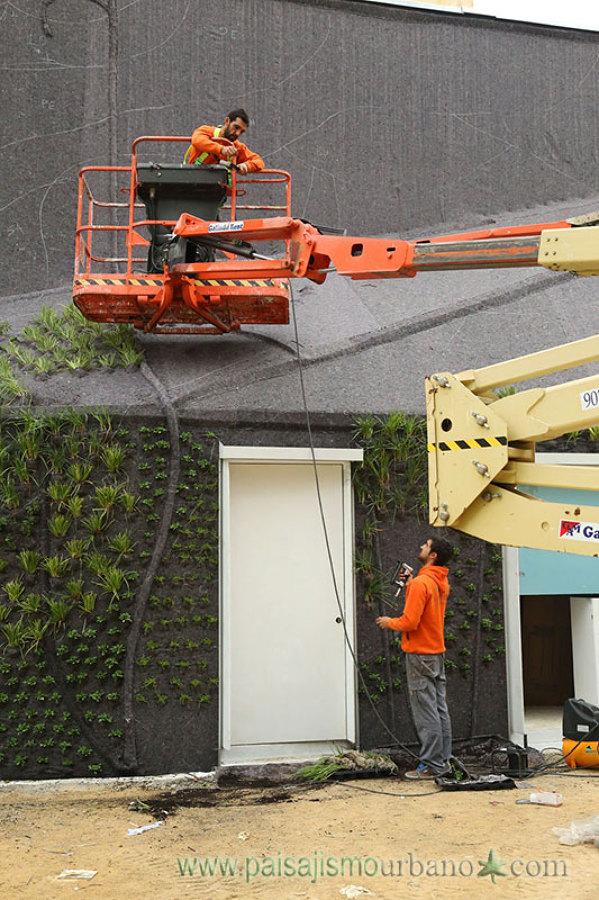Colocando las plantas