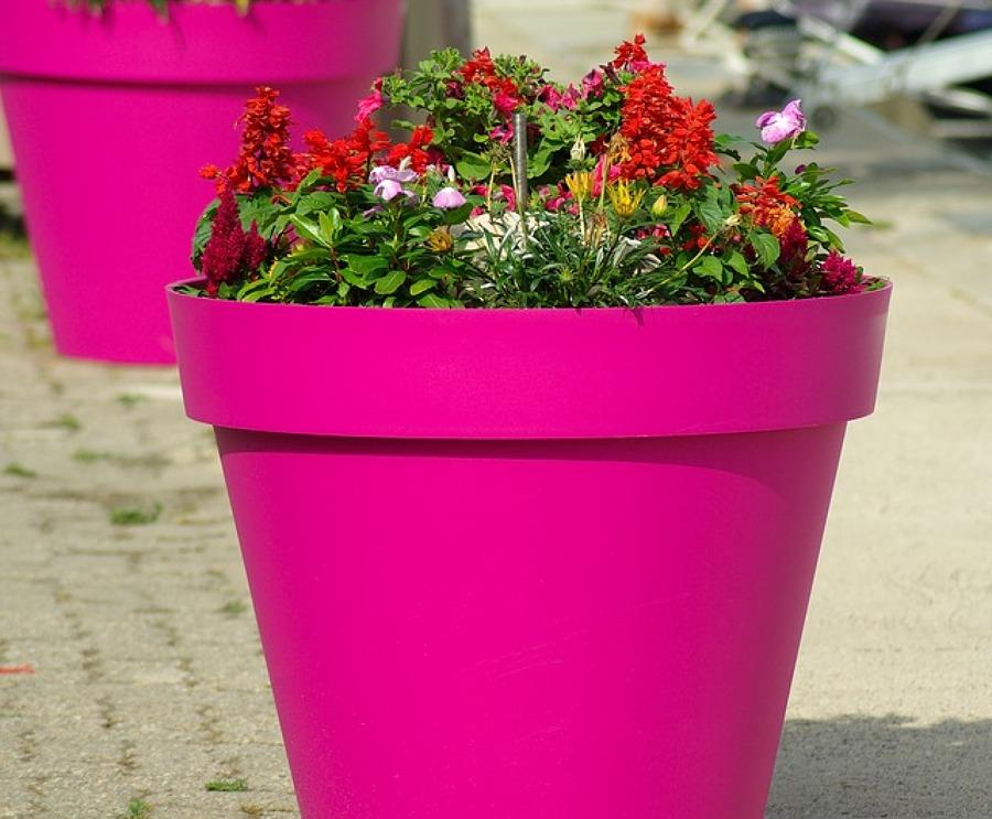 Combinación de Flor en exterior