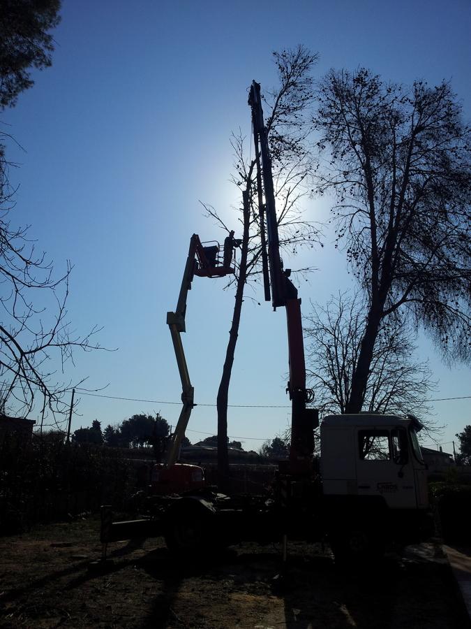 Cortando los últimos pinos