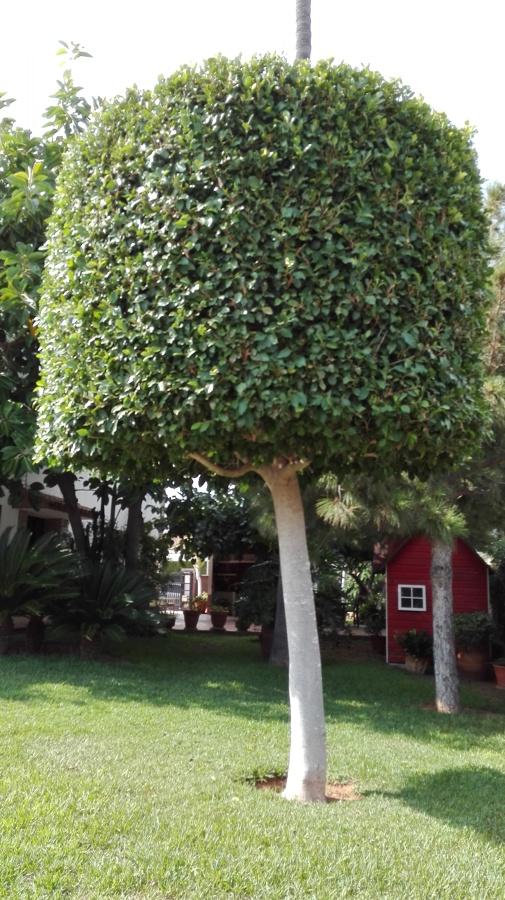 Mantenimiento jardin ideas jardineros for Arboles para jardin que den sombra