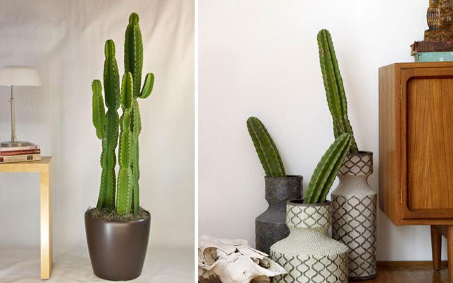 Foto decorar con cactus de anna gaya 884541 habitissimo for Cactus cuidados interior