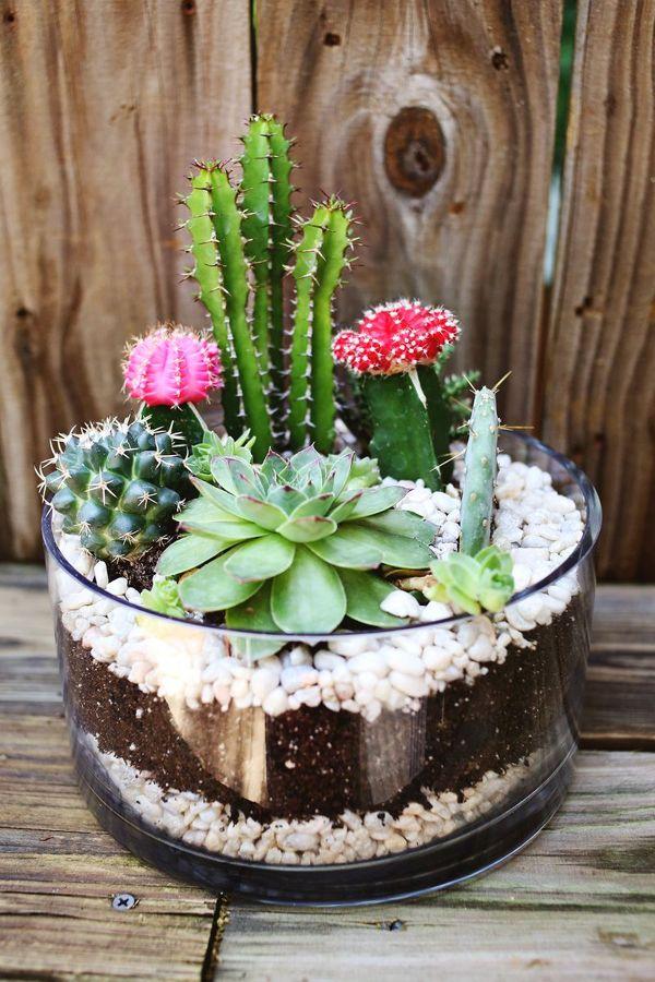 Foto Decorar con Cactus de Anna Gaya 884548 Habitissimo