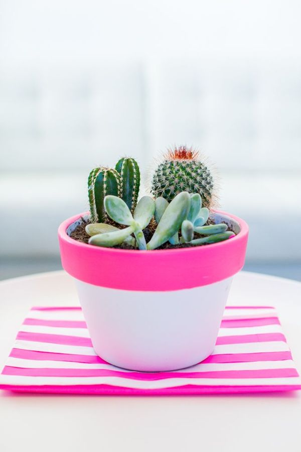 decorar con catus